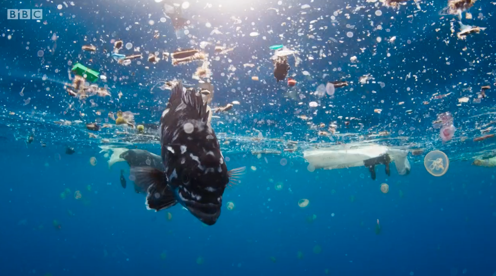 By 2050 The Ocean Is Expected To Contain More Plastic